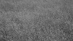 Grass, Series II, No. 1, 2016