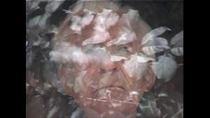 Walter/Leaves, 2002